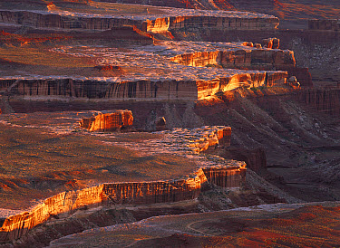 View from Grandview Point looking over sandstone canyons of Monument Basin in the Island in the Sky section of the park, Canyonlands National Park, Utah  -  Tim Fitzharris