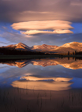 Lenticular clouds over Mt Dana, Mt Gibbs and Mammoth Peak reflected in flooded Tuolumne Meadows, Yosemite National Park, California  -  Tim Fitzharris