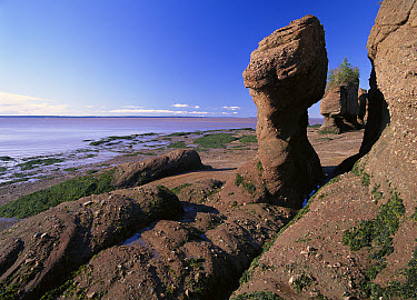 The flower pots, huge sandstone formations up to 50 feet high created by dramatic tides in the Bay of Fundy, Hopewell Rocks Provincial Park, New Brunswick, Canada  -  Tim Fitzharris