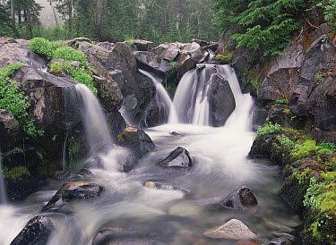 Paradise River cascade, Mt Rainier National Park, Washington  -  Tim Fitzharris
