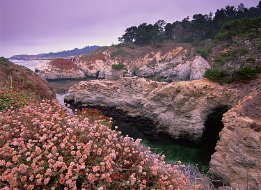 Rocky coastline of Point Lobos State Reserve, California  -  Tim Fitzharris