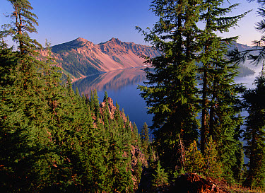 Coniferous forest surrounding Crater Lake, lake fills a six mile wide caldera created by the eruption and collapse of Mt Mazama 7,000 years ago, Crater Lake National Park, Oregon  -  Tim Fitzharris