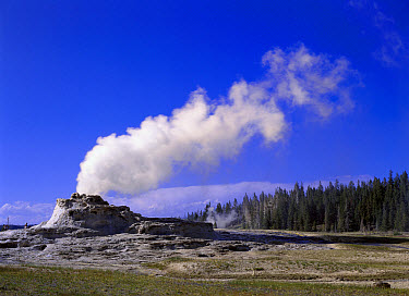 Castle Geyser, Yellowstone National Park, Wyoming  -  Tim Fitzharris