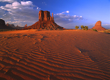 The east and west Mittens surrounded by rippled sand, Monument Valley Navajo Tribal Park, Arizona  -  Tim Fitzharris