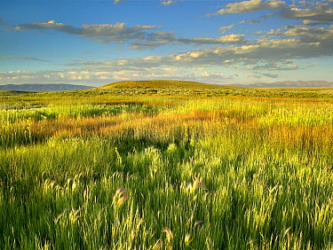 Grasslands, Arapaho National Wildlife Refuge, Colorado  -  Tim Fitzharris