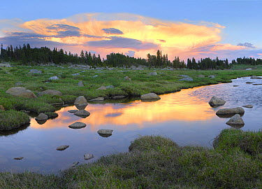 Clouds and sunset reflected in stream, Hellroaring Plateau, Montana  -  Tim Fitzharris