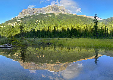 Mt Burgess reflected in Emerald Lake, Yoho National Park, British Columbia, Canada  -  Tim Fitzharris