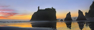 Panorama of Abby Island and seastacks silhouetted at sunset, Ruby Beach, Olympic National Park, Washington  -  Tim Fitzharris