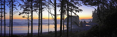 Panorama of the Pacific Ocean and Abbey Island seen through silhouetted trees at sunset, Ruby Beach, Olympic National Park, Washington  -  Tim Fitzharris