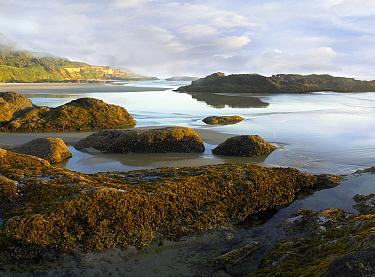 Seaweed covered rocks exposed at low tide, Neptune Beach, Oregon  -  Tim Fitzharris