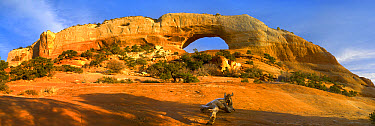 Wilson arch with a span of 91 feet and height of 46 feet, off of highway 191, made of entrada sandstone, Utah  -  Tim Fitzharris