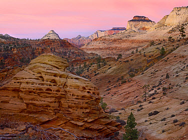 East and West Temples showing sedimentary rocks including white Navajo sandstone, Zion National Park, Utah  -  Tim Fitzharris