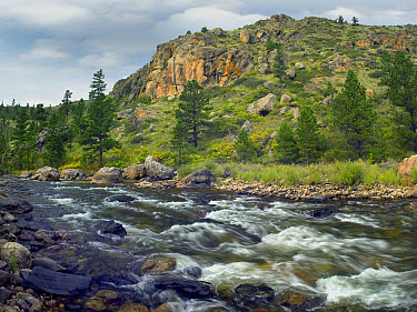 Rapids with cliffs above Cache La Poudre River, Colorado  -  Tim Fitzharris