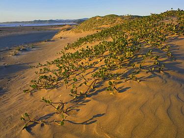 Beach at Morro Strand State Beach, California  -  Tim Fitzharris