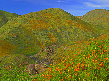 Temescal Canyon and poppies, California  -  Tim Fitzharris