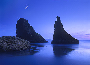 Sea stacks at dusk along Bandon Beach with rising moon, Oregon  -  Tim Fitzharris