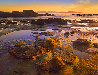 Tidepools exposed at low tide, Botanical Beach, Juan de Fuca Provincial Park, Vancouver Island, British Columbia, Canada  -  Tim Fitzharris