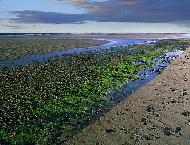 Freshwater stream flowing into the Atlantic Ocean, Cape Cod National Seashore, Massachusetts  -  Tim Fitzharris