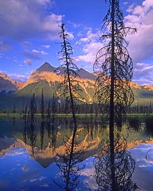 Chancellor Peak reflected in lake, Yoho National Park, British Columbia, Canada  -  Tim Fitzharris