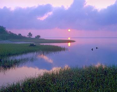 Marsh at sunrise over Eagle Bay, St Joseph Peninsula, Florida  -  Tim Fitzharris