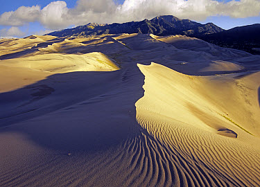 Rippled sand dunes with Sangre de Cristo Mountains in the background, Great Sand Dunes National Park and Preserve, Colorado  -  Tim Fitzharris