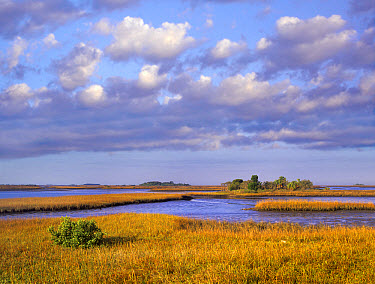 Saltwater marshes at Cedar Key, Florida  -  Tim Fitzharris