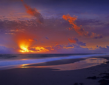 McArthur beach at sunrise, Florida  -  Tim Fitzharris