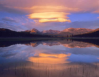Lenticular clouds over Mount Dana, Mount Gibbs, and Mammoth Peak at Tuolumne Meadows, Yosemite National Park, California  -  Tim Fitzharris