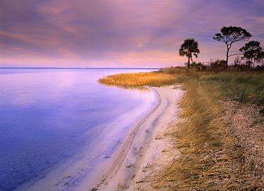Beach along Saint Joseph's Bay, Florida  -  Tim Fitzharris