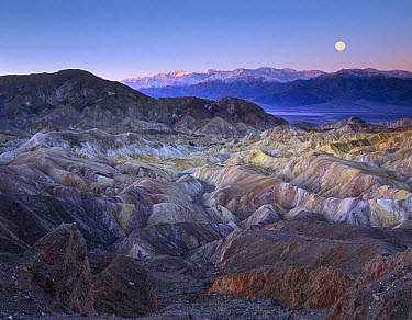 Full moon setting over Zabriskie Point, morning,  Death Valley National Park, California  -  Tim Fitzharris