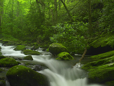 Roaring Fork River flowing through the Great Smoky Mountains National Park, Tennessee  -  Tim Fitzharris
