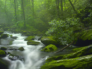 Roaring Fork River flowing through forest in Great Smoky Mountains National Park, Tennessee  -  Tim Fitzharris