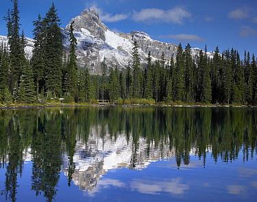 Wiwaxy Peaks and Cathedral Mountain at Lake O'Hara, Yoho National Park, British Columbia, Canada  -  Tim Fitzharris