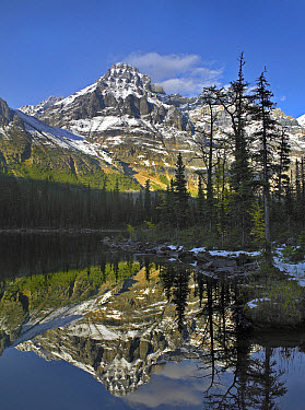 Mount Huber reflected in lake with boreal forest, Yoho National Park, British Columbia, Canada  -  Tim Fitzharris