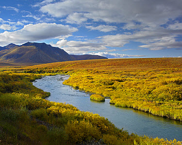 North Klondike River flowing through tundra beneath the Ogilvie Mountains, Yukon Territory, Canada  -  Tim Fitzharris