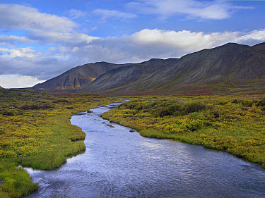 Hart River flowing over tundra beneath the Ogilvie Mountains, Yukon Territory, Canada  -  Tim Fitzharris