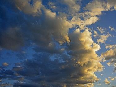 Cumulus clouds in blue sky  -  Tim Fitzharris