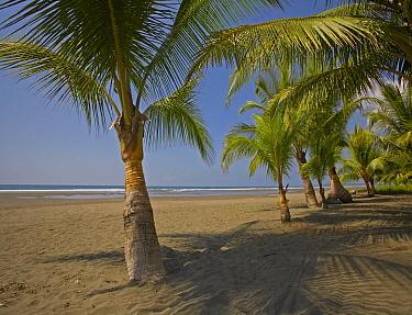 Playa Esterillos Este, Puntarenas, Costa Rica  -  Tim Fitzharris