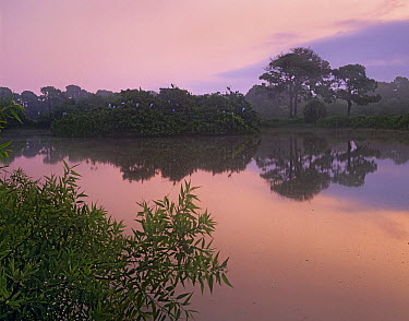 Venice Rookery, Audobon Society monitored birding site in Venice, Florida  -  Tim Fitzharris