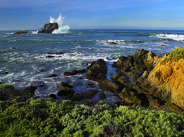 Seastack and rocky shore at Point Piedras Blancas, California  -  Tim Fitzharris