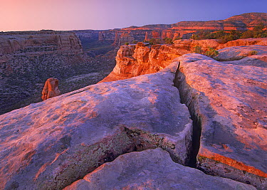 Book Cliff Overlook at dusk, Colorado National Monument, Colorado  -  Tim Fitzharris