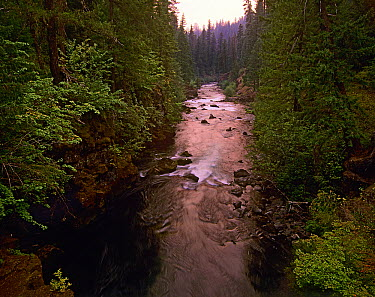 Rogue River with rapids, Rogue River National Forest, Oregon  -  Tim Fitzharris