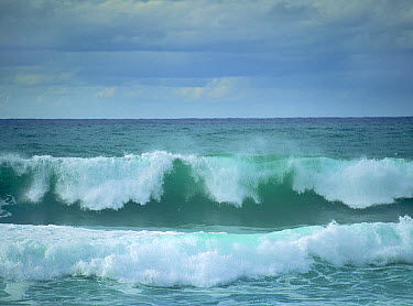Ocean waves, Hawaii  -  Tim Fitzharris