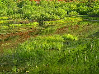 Dolores River, backwater near Rico, Colorado  -  Tim Fitzharris