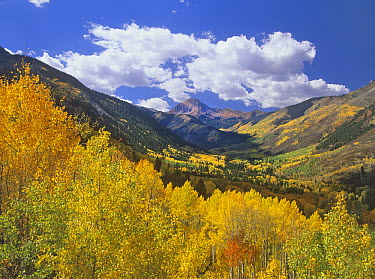 Haystack Mountain with aspen forest, Maroon Bells-Snowmass Wilderness, Colorado  -  Tim Fitzharris