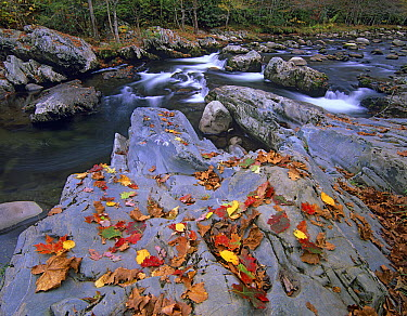 Little Pigeon River, Great Smoky Mountains National Park, Tennessee  -  Tim Fitzharris