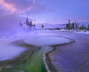 Hot spring, Upper Geyser Basin, Yellowstone National Park, Wyoming  -  Tim Fitzharris