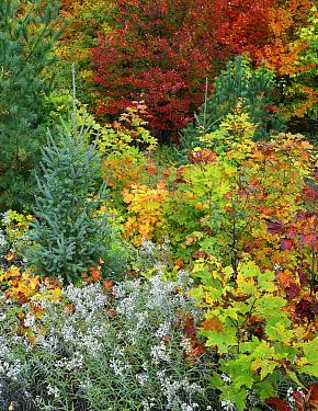 Autumn colors, Killarney Provincial Park, Ontario, Canada  -  Tim Fitzharris