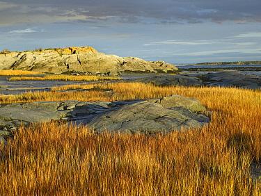 Tidal marsh, Riviere-Trois-Pistoles, Quebec, Canada  -  Tim Fitzharris