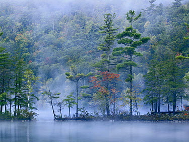 Emerald Lake in fog, Emerald Lake State Park, Vermont  -  Tim Fitzharris
